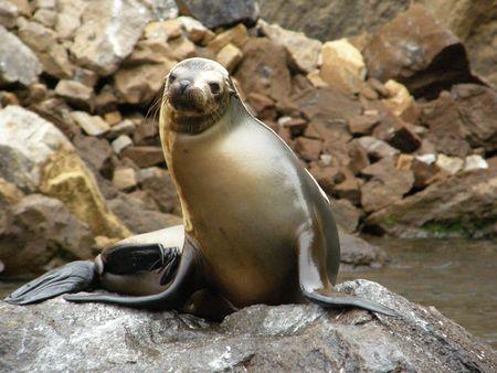 Galapagos Sean leone