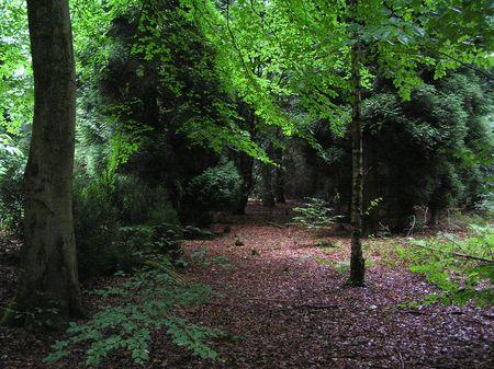 dean lake: Forest of Dean