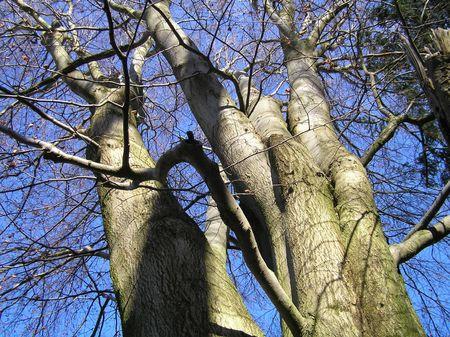 dean lake: Winter Trees