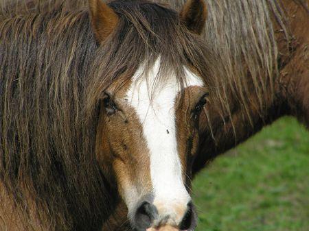 dean lake: Horse Stock Photo
