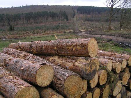 dean lake: Logs, Forest of Dean