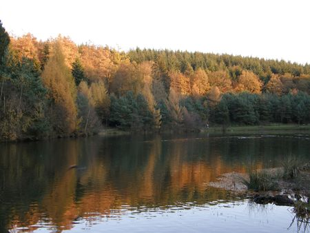 dean lake: Mallards Pike, Forest of Dean