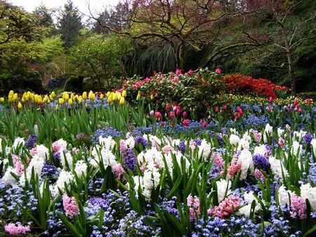 Primavera nei giardini Butchart, Victoria, Canada Archivio Fotografico
