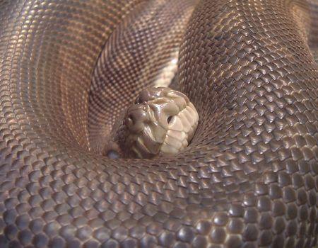 hiss: Python