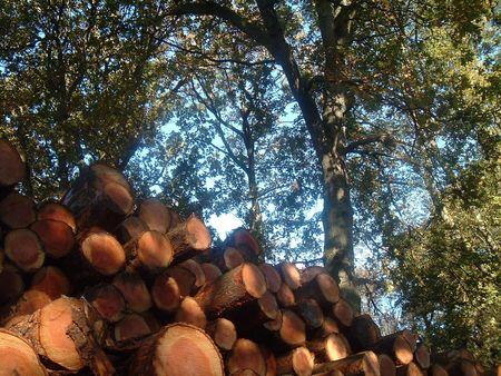 dean lake: Wood Harvest Stock Photo