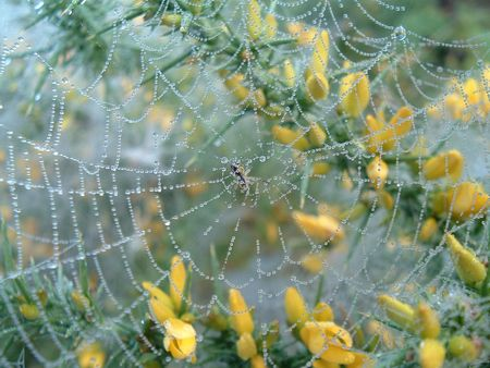 dean lake: Spiders Web with Morning Dew Stock Photo