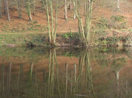 dean lake: Soudley Ponds in the Forest of Dean