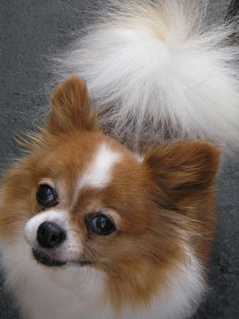 wag: Dog