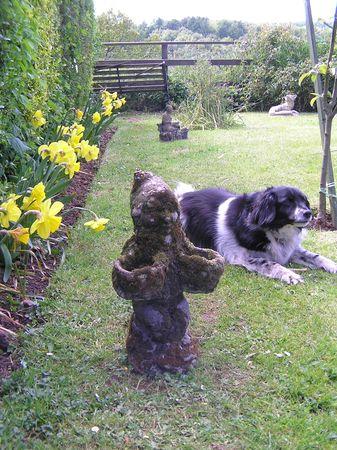Dog and Daffodils photo