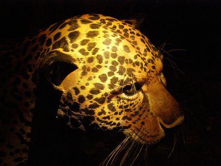 Model of Jaguar, San Jose, Costa Rica Stock Photo - 2902327