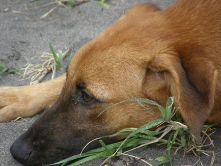 Stray Dog in need of some love, Costa Rica Stock Photo