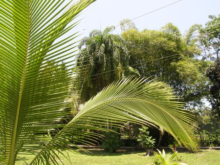 canal parade: Palm Tree, Costa Rica