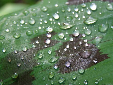 Rain on leaf after storm, Costa Rica Stock Photo - 2899618