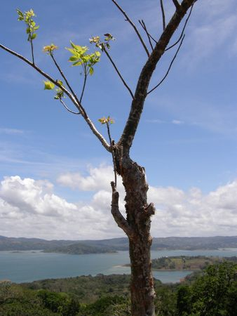 howler: Lake Arenal, Costa Rica Stock Photo