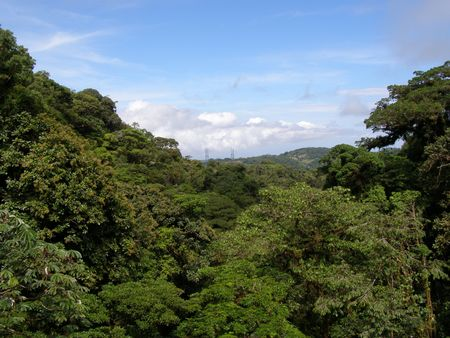 Monteverde Cloud Forest, Costa Rica Stock Photo - 2892018