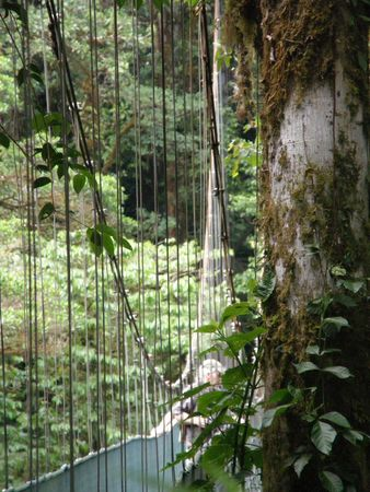 Canopy Bridge, Monteverde, Costa Rica photo