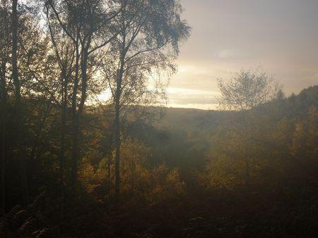 landslip: Misty morning in the Forest