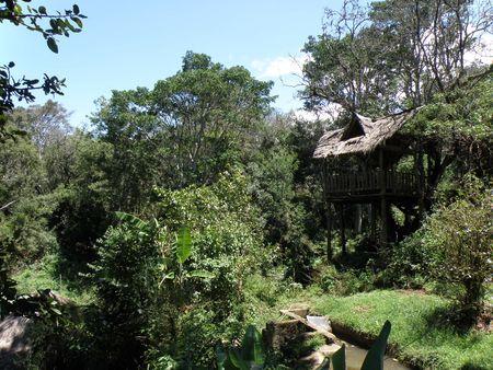aberdares: Kenya Safari, Trout Tree Farm Stock Photo