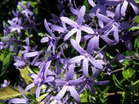 lake nukuru: Purple Flowers