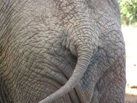 predetor: Kenya Safari, Elephant a Treetops