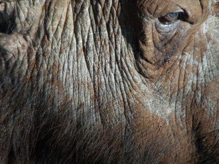predetor: Kenya Safari, a Buffalo Treetops Archivio Fotografico