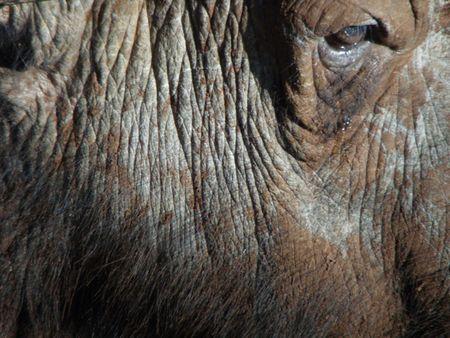 Kenya Safari, Buffalo at Treetops Stock Photo - 3815762