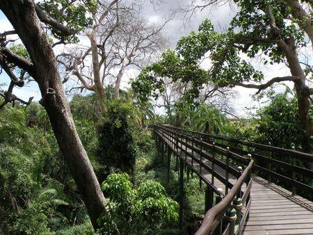 aberdares: Kenya Safari, Walkway in Masai Mara Stock Photo