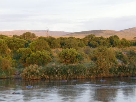 predetor: Kenya Safari, Hippo Pool in Masai Mara