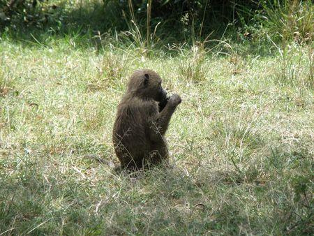 aberdares: Kenya Safari, Baboon in Masai Mara