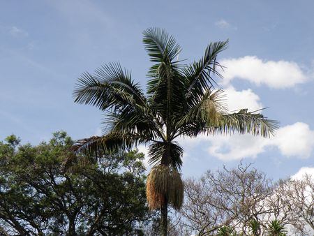 aberdares: Clouds in Sky and Palm Trees, Kenya