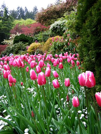 Butchart Gardens, Victoria, Canada in the Spring - Tulips
