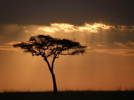 aberdares: sunset by acacia tree on the masai mara africa Stock Photo