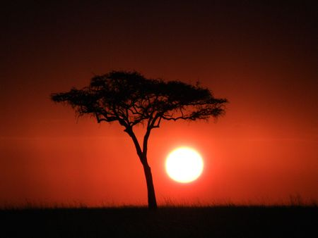 mara: Blood red sunset by acacia tree on the masai mara africa Stock Photo