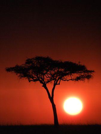 safari game drive: Tramonto rosso sangue da alberi di acacia sulla Masai Mara africa Archivio Fotografico