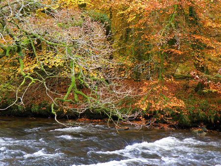 exmoor: River in exmoor