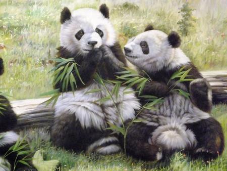 Immagine Giant Panda Archivio Fotografico