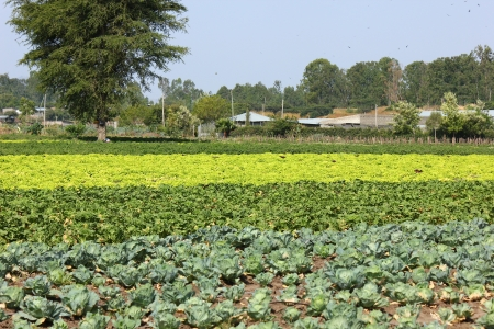 ethiopian: Ethiopian Farm