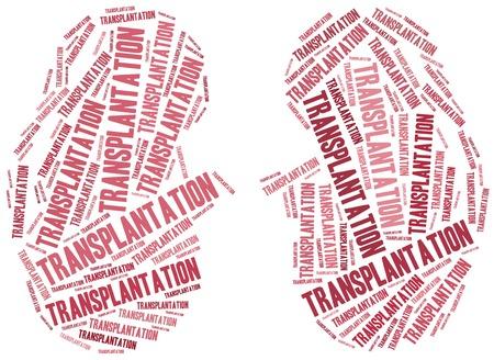 higado humano: El trasplante de ri��n. Ilustraci�n de la nube de Word. Foto de archivo