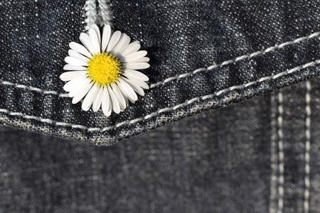 Gänseblümchen (Bellis perennis) im Knopfloch der Jeanstasche Standard-Bild