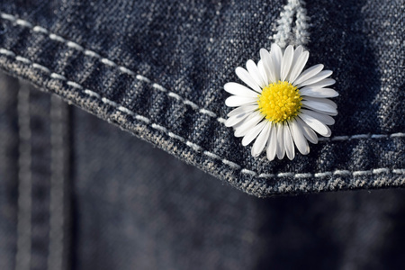 Daisy (Bellis perennis) in buttonhole of jeans pocket