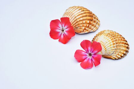 Romantic composition with phlox flowers and sea shells
