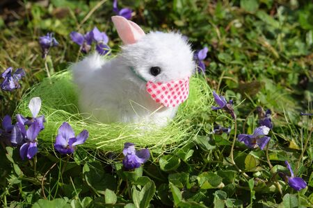 Cute bunny in a grass with cotton face protection Reklamní fotografie