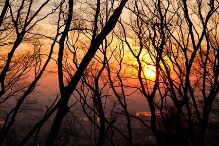 the sun shining through a bunch of  tree