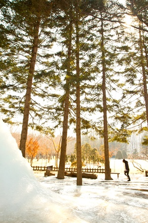 Nami Island with snow in Winter