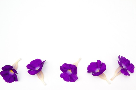 flower background Stock Photo - 9993307