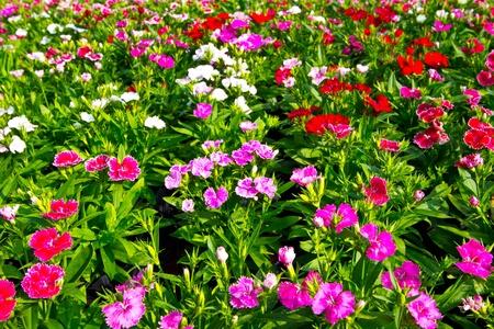 giardino fiorito Archivio Fotografico
