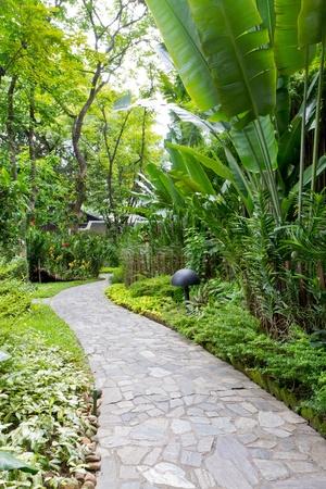 path and garden photo