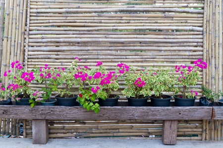 Bamboo fence and beautiful flower photo