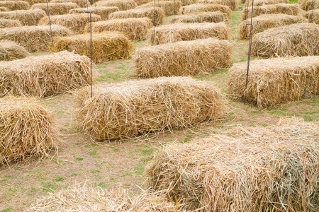 many pile of rice straw photo