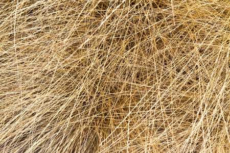dry grass background photo